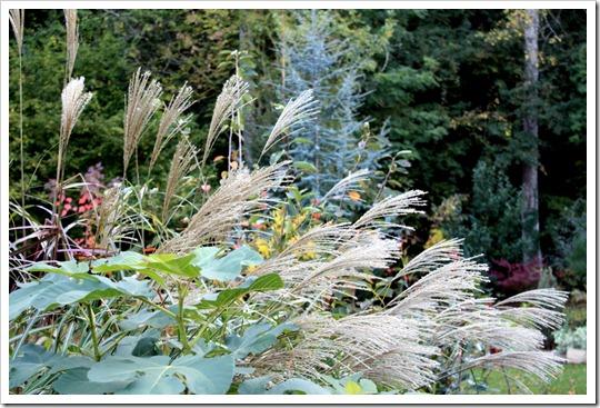 Травянистые, хвойные и японские клены