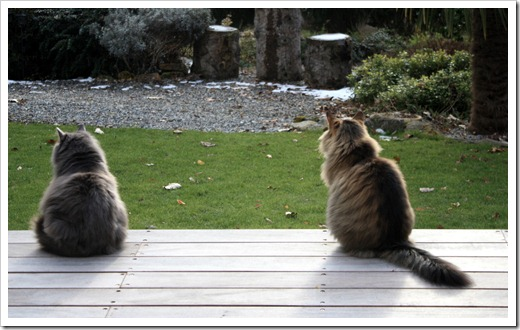 сторожевые коты