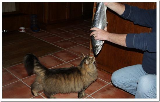 кот и лосось