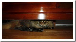 кот под шкафом