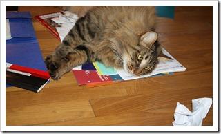 кот с документами