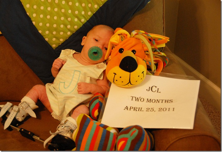 2 months with lion