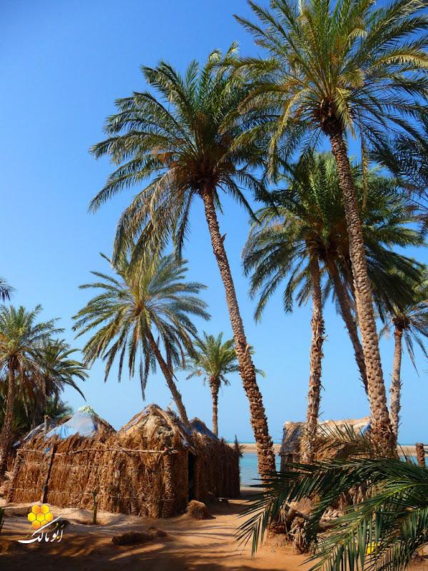 5001 سندريلا اليمن بعدسة أبو مالك الخوخه مناظر طبيعية خلابه