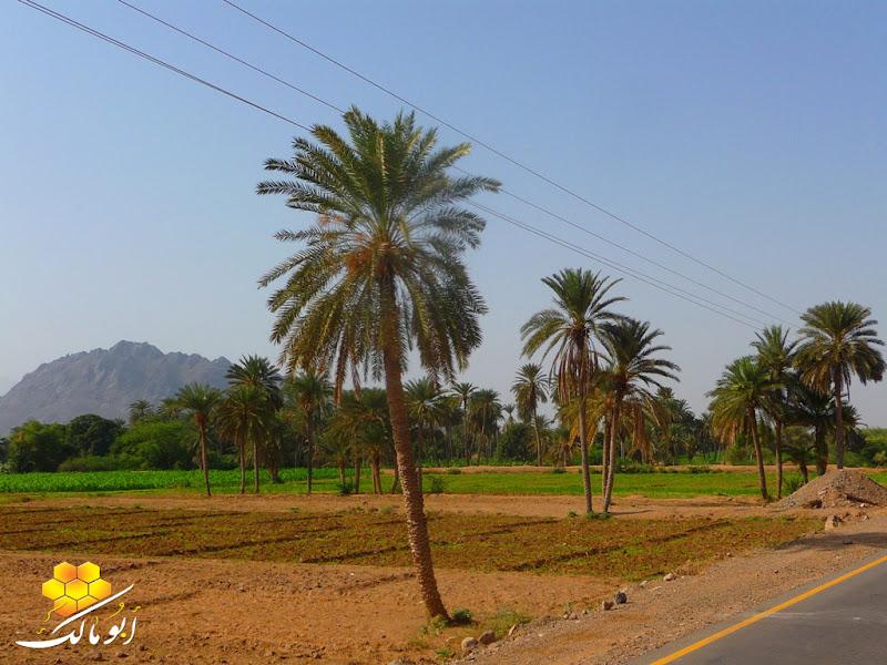 5002 سندريلا اليمن بعدسة أبو مالك الخوخه مناظر طبيعية خلابه