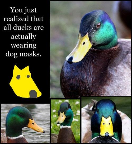 Todos os patos usam máscara de cachorro!