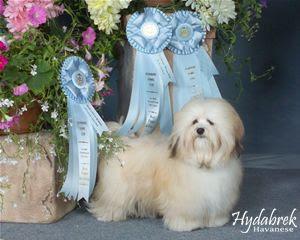 In memory of Hydabrek's Hyacinth Bouquet, spelt B-U-C-K-E-T
