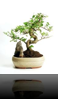 Etichette: arte e cultura giapponese, chinatown milano, filosofia del tao, il giardino di Sejbei, italia e giappone, meditazione, mente, notizie, notizie interessanti sul giappone, oriente, pensieri, poesie, riflessioni, sejbei, stile di vita giapponese, vivere all'orientale, andrea berini, bonsai, l'arte del bonsai, cosa vuol dire bonsai