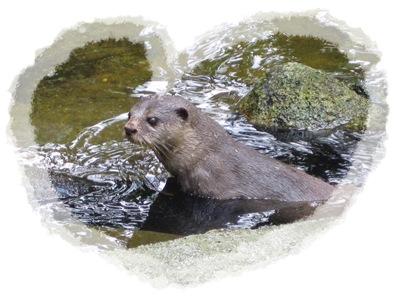 9 Otter