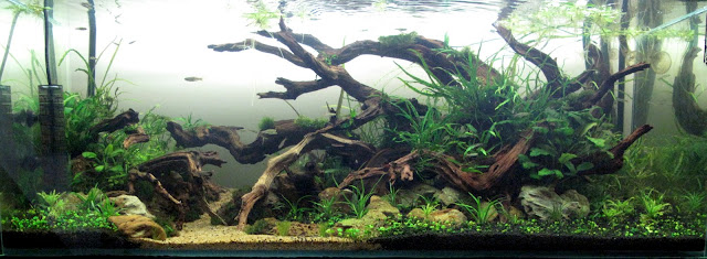 Good Here Is My New Driftwood Layout: