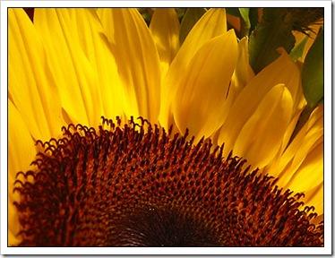 bday_flowers_2003_2