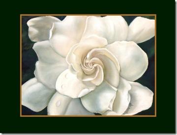 gardenia-darlene-richardson
