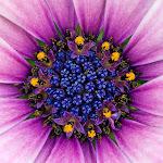 Nature HD 35 - 01.jpg
