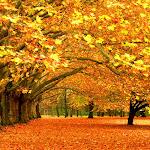 Nature HD 35 - 43.jpg