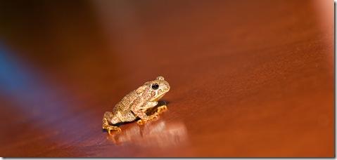 little frog1