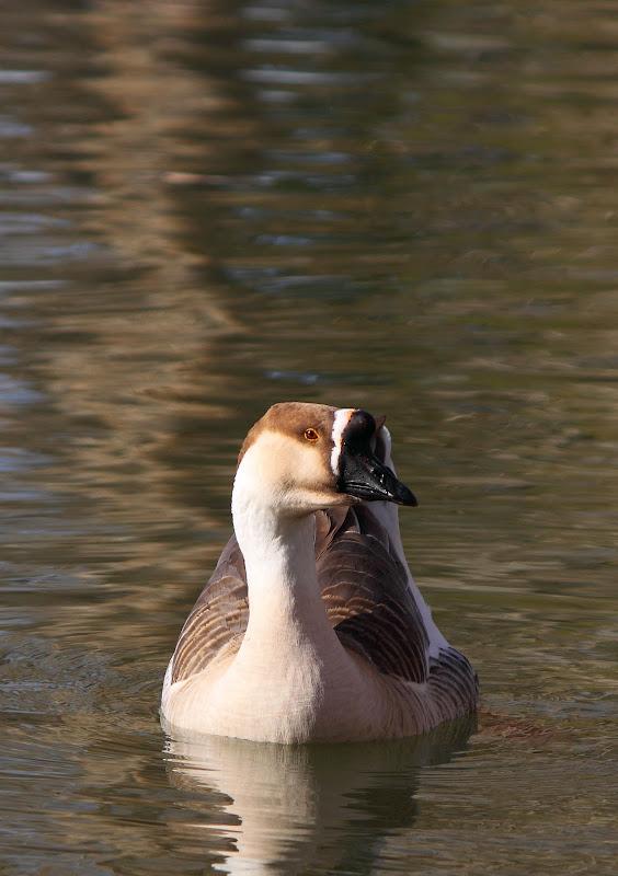 IMAGE: http://lh4.ggpht.com/__5V00Q79m6c/TSkq-iFUZtI/AAAAAAAAANY/UxRg91Be3lw/s800/Goose.jpg