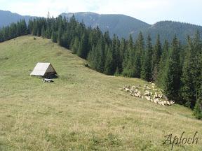 Tatry - Ścieżka nad Reglami
