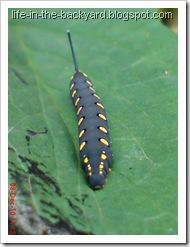 Caterpillars Attack 20
