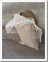 weird white mushroom_jamur ular 3