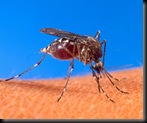 757px-Aedes_aegypti_biting_human