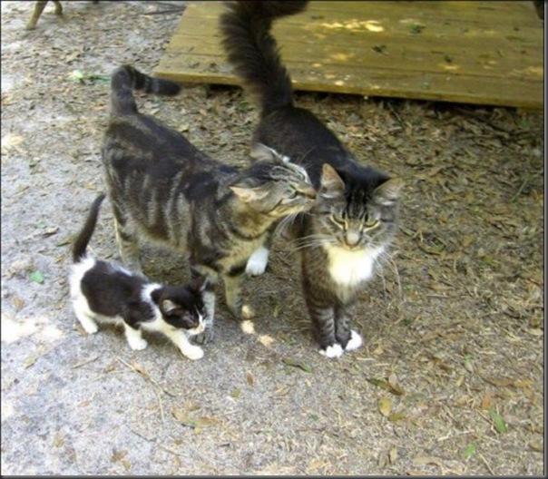 A Terra Prometida para Gatos (34)