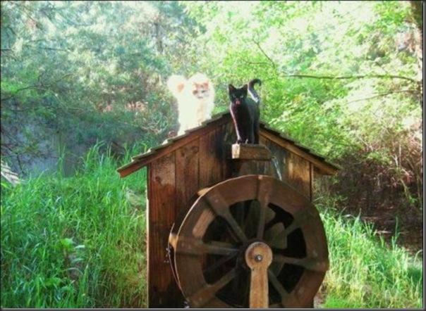 A Terra Prometida para Gatos (29)