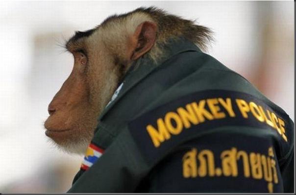 Policial macaco na Thailandia (2)