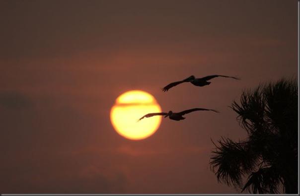 Lindas imagens do pôr do Sol (3)