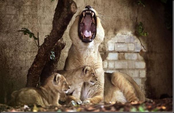 Filhotes com seus pais no mundo animal