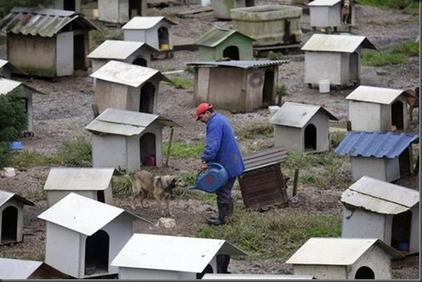 Favela para cães no Brasil (2)