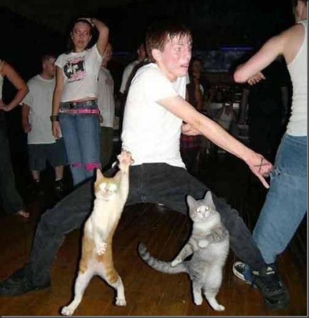 Comemorações de aniversário de gatos (12)