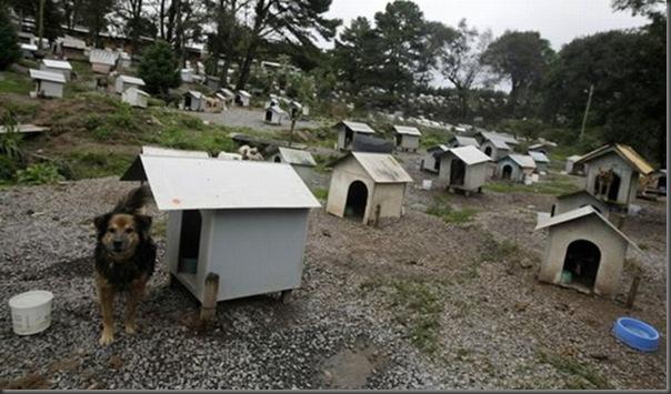 Favela para cães no Brasil (1)
