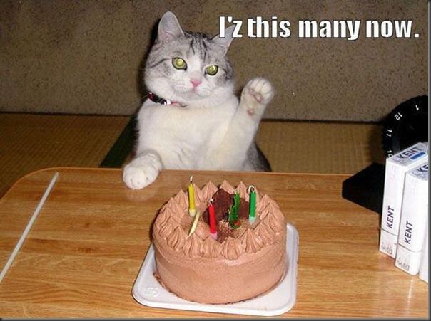 Comemorações de aniversário de gatos (4)