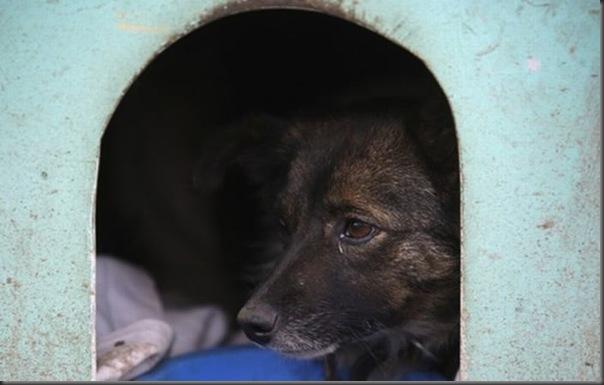 Favela para cães no Brasil (6)