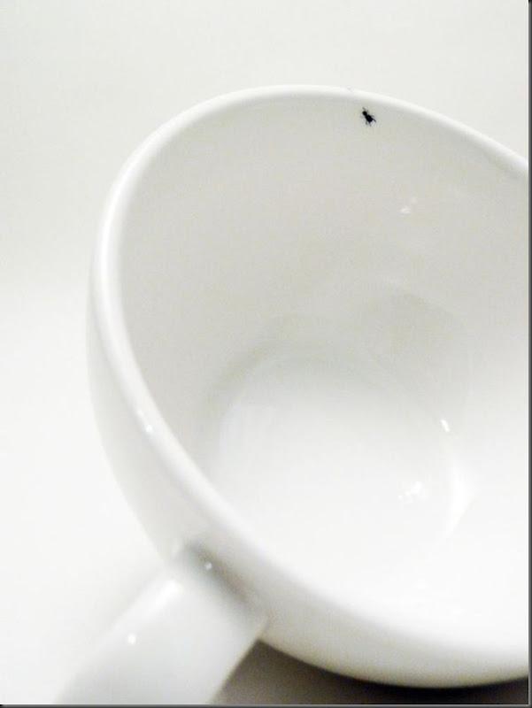 invasão de formigas (8)