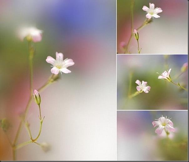 Lindas imagens de flores (25)