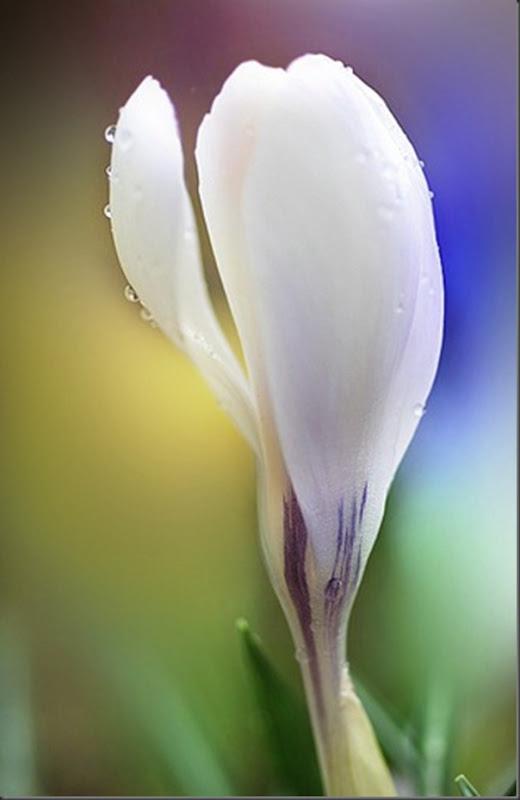 Lindas imagens de flores (21)