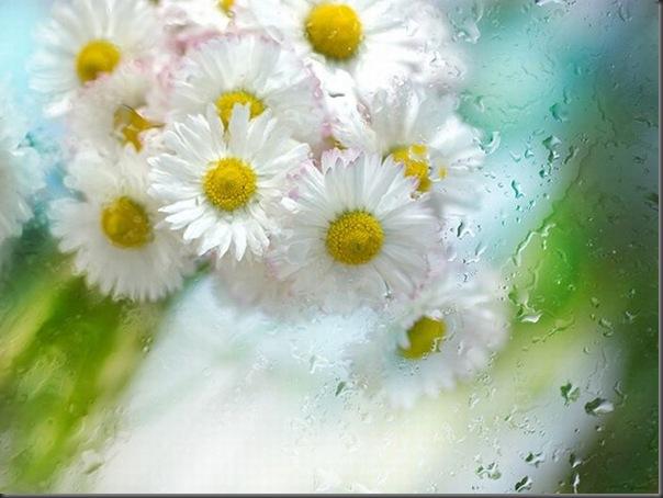 Lindas imagens de flores (31)