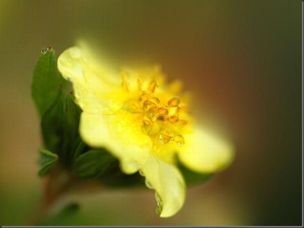 Lindas imagens de flores (3)