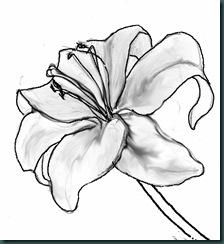 lily (2) copy