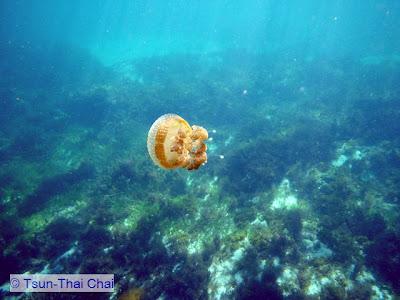 Chai's Marine Life Blog: Blog hiatus