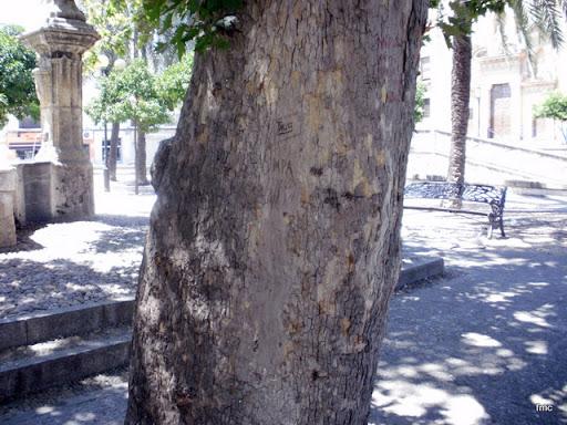 El tronco con algunos grafitis