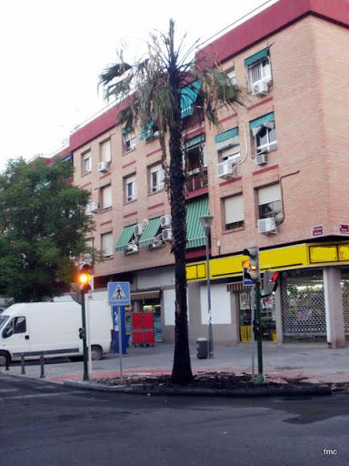 Otra vista de la palmera quemada en la esquina de El Cairo.