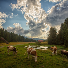 Grazing cows by Stanislav Horacek - Landscapes Prairies, Meadows & Fields