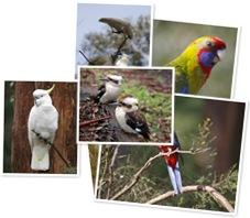 View birds