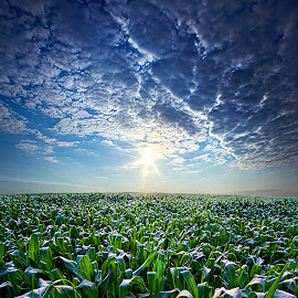 Knee High in July by Phil Koch - Landscapes Prairies, Meadows & Fields ( vertical, photograph, farmland, yellow, storm, leaves, crop, love, sky, nature, tree, autumn, snow, orange, twilight, agriculture, horizon, portrait, environment, dawn, season, national geographic, serene, trees, floral, inspirational, natural light, wisconsin, phil koch, spring, sun, photography, corn, farm, horizons, rain, inspired, clouds, office, park, green, scenic, morning, farming, shadows, field, red, blue, sunset, peace, fall, meadow, summer, earth, sunrise, landscapes )