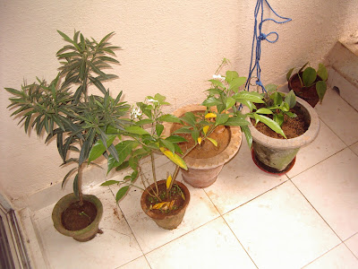 Repot plants