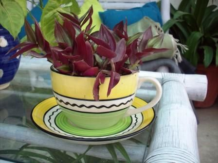 A big coffee cup with saucer