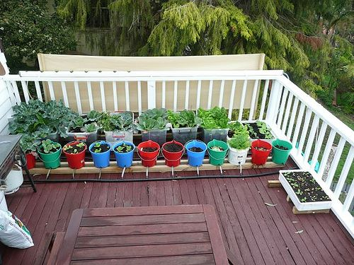 Plants in colorful buckets. What an idea!
