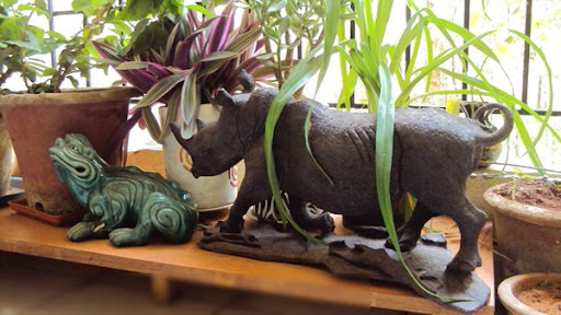 Rhino and Frog