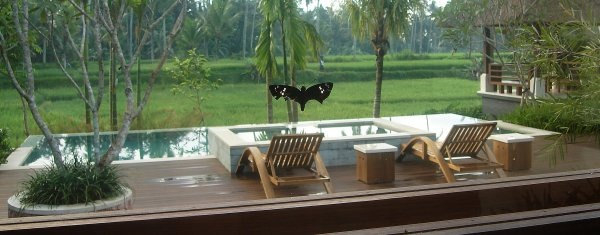 Butterfly in Villa Sabandari, one of the newest 4 star hotels in Ubud, Bali